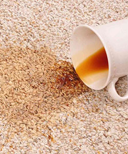 bj carpet cleaning stain removal whangarei
